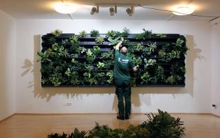 Grüne Wände