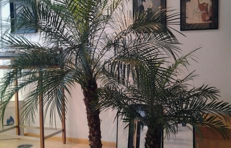 Bürobepflanzung