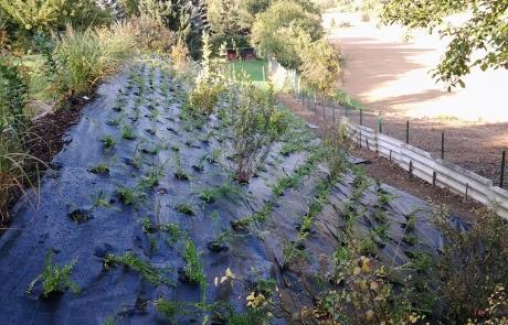 arbeiten pflanzungen