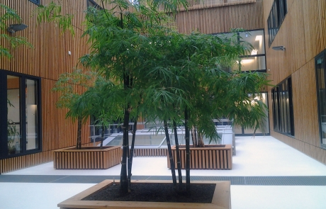 Bambus Lichthof