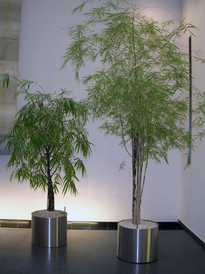 Topf bepflanzt
